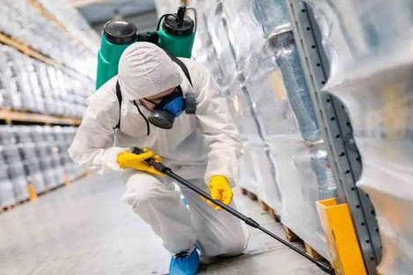 Pest and Termites Treatment